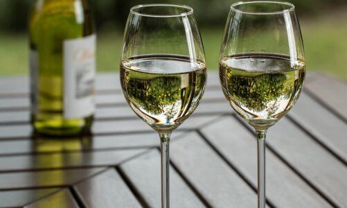 Arcibiskupské vinařství sklidilo letošní úrodu a k svatomartinské huse doporučuje mladá vína