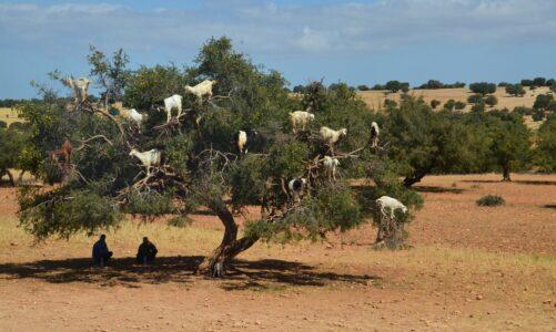 Pastýři pospíchali do Betléma a nalezli Marii a Josefa i děťátko položené v jeslích