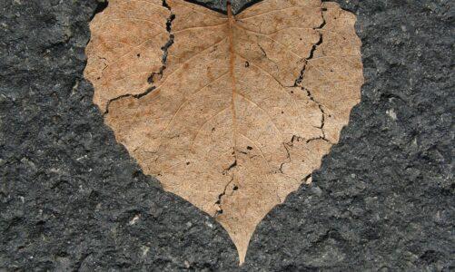 Zarmoucen nad zatvrzelostí jejich srdce