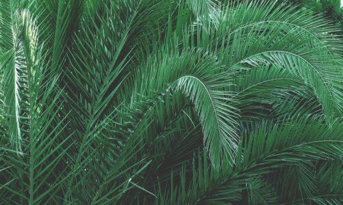 Palmovou nedělí s pašijemi vstupujeme do Svatého velikonočního týdne