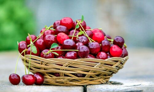 Dobrý strom nemůže nést špatné ovoce