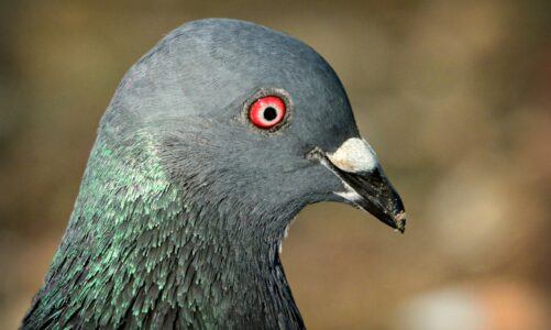 Buďte opatrní jako hadi a bezelstní jako holubice
